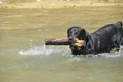 Meu cão bonito Fotos de Stock