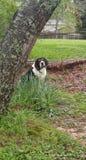 Meu cão meu coração fotos de stock