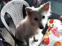 Meu cachorrinho bonito Foto de Stock Royalty Free