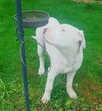 Meu cachorrinho lindo Fotografia de Stock Royalty Free