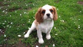 Meu filhote de cachorro pequeno Fotos de Stock Royalty Free