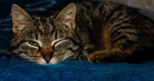 Meu gatinho foto de stock royalty free