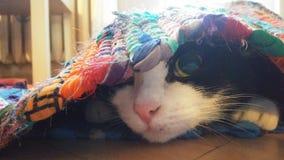 Meu gatinho pequeno doce do espião fotografia de stock royalty free