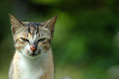 Meu gato Foto de Stock