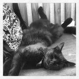 Meu gato Imagem de Stock Royalty Free