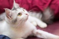 Meu gato Imagens de Stock