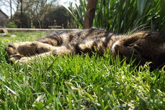 Meu gato Fotografia de Stock Royalty Free