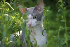 Meu gato Fotografia de Stock
