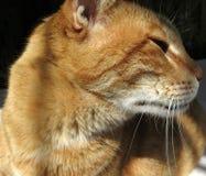 Meu gato bonito com olhos verdes imagem de stock