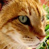 Meu gato bonito com olhos verdes fotos de stock royalty free
