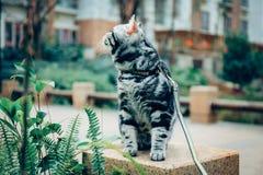 Meu gato, Levi fotos de stock royalty free