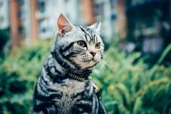 Meu gato, Levi foto de stock