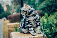 Meu gato, Levi imagem de stock royalty free