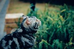 Meu gato, Levi fotografia de stock