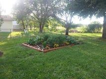 Meu jardim Imagem de Stock Royalty Free