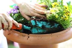 Meu jardim bonito imagens de stock royalty free