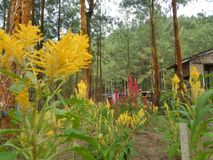 Meu jardim verde fotografia de stock