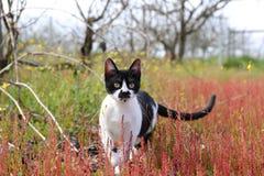 Meu modelo favorito, Navi o gato fotografia de stock