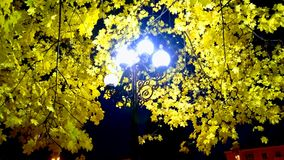 Meu outono Foto de Stock Royalty Free