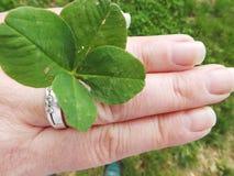 Meu trevo afortunado das folhas do encanto quatro disponível foto de stock royalty free
