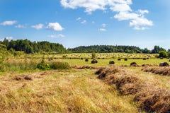 Meule de foin dans le domaine Panorama de beauté rurale Photographie stock