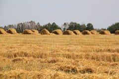 Meule de foin dans un domaine de blé image stock