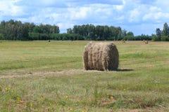 Meule de foin en Sibérie image libre de droits