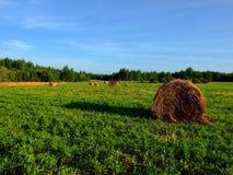 Meule de foin sur l'herbe verte Photos stock