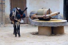 Meule de traction d'âne photo libre de droits