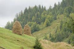 Meules de foin sur le flanc de coteau, montagnes d'Apuseni, Roumanie Image libre de droits