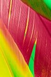 Meurtre de couleurs I Images libres de droits