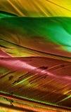 Meurtre de couleurs II Photos libres de droits