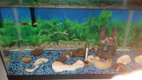 Meus peixes Fotografia de Stock Royalty Free
