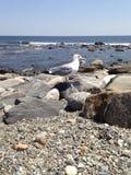 mewa rock Zdjęcie Royalty Free