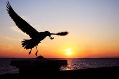 mewa słońca Zdjęcia Royalty Free
