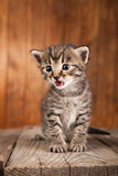 Mewing kitten on background of old wooden boards Stock Images
