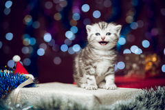 Free Mewing Kitten Sitting On Christmas Gift Stock Image - 81213561