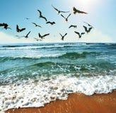 mewy morskie Fotografia Royalty Free