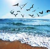 mewy morskie Zdjęcia Royalty Free