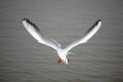 mewy morza Zdjęcia Royalty Free
