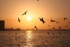 mewy morza Fotografia Royalty Free
