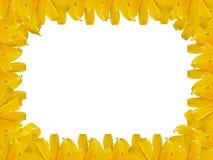 Mexicaans de fotoframe van het zonnebloemonkruid Stock Afbeeldingen