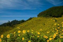 Mexicaans zonnebloemonkruid op de heuvel Royalty-vrije Stock Foto's