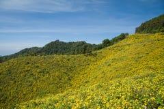 Mexicaans zonnebloemonkruid op de heuvel Stock Foto's