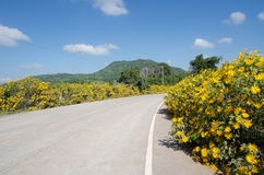 Mexicaans zonnebloemonkruid (Tithonia-diversifolia) Royalty-vrije Stock Afbeeldingen