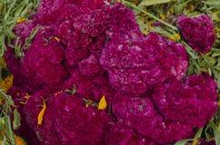 Mexicaanse bloemen Stock Afbeeldingen
