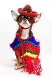 Mexicaanse Chiwawa Royalty-vrije Stock Foto's