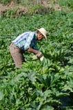 Mexicaanse migrerende gebiedsarbeider Stock Afbeelding