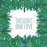 Mexicaanse succulente cuctusgrens Royalty-vrije Stock Foto's
