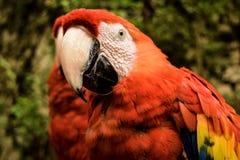 Mexicaanse vogel Royalty-vrije Stock Afbeeldingen